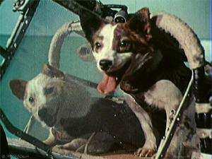 Космический корабль «Восток» с собаками Белкой и Стрелкой